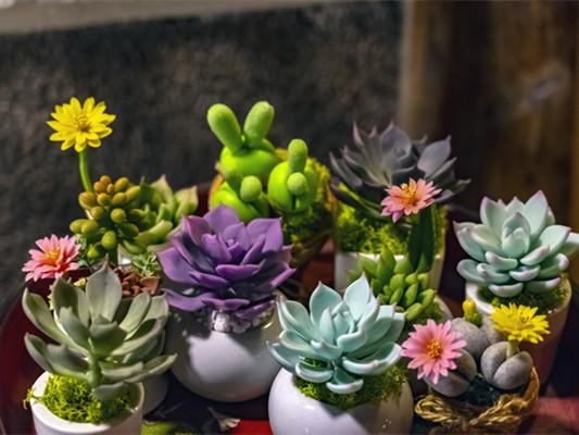 适合阳台的绿植有什么?怎样选择适合阳台的绿植?