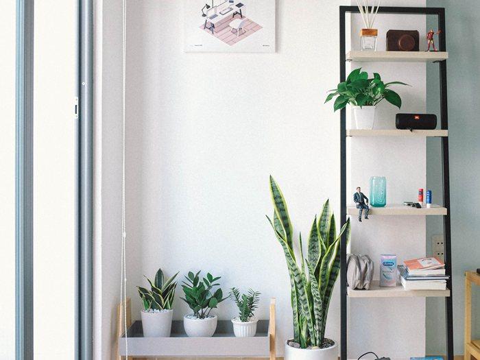 吊兰花可以放在卧室吗?卧室装修有哪些风格?